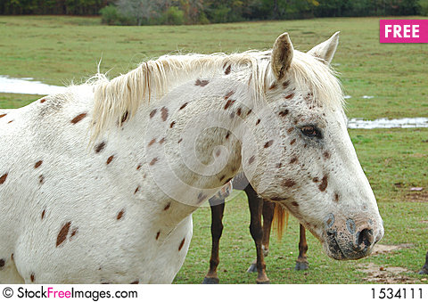 Free Spots Stock Image - 1534111
