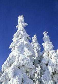 Free Snowy Tree Stock Photo - 1530820