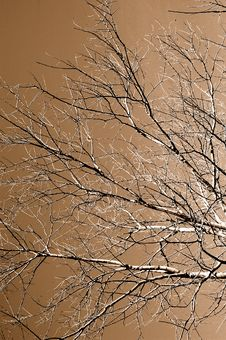 Free Winter Tree Stock Photo - 1531170