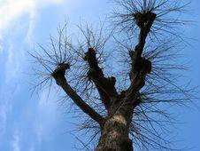 Free Tree Stock Image - 1532001