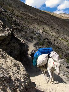 Free Trekker Mule Stock Images - 1532304