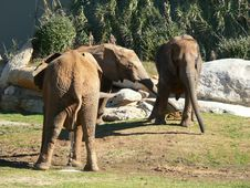 Free Elephant Peeing Stock Photo - 1533000