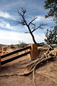 Free Bryce Canyon Stock Images - 1533204