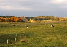 Free Autumn Landscape Royalty Free Stock Images - 1534809