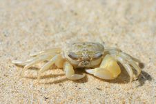 Free Sand Crab Royalty Free Stock Image - 1535366