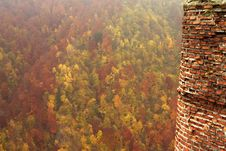 Free Forest And Tower Royalty Free Stock Photography - 1536087