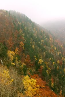 Free MIx Forest Royalty Free Stock Image - 1536156