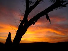 Free Thorn Sunset Royalty Free Stock Photos - 1536908