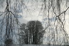 Free Winter Trees Stock Photography - 1536922