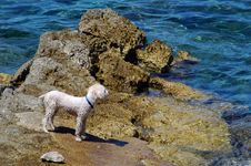 Free Dog On The Beach Royalty Free Stock Image - 1538216