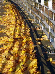 Free Autumn Stock Photo - 1539140