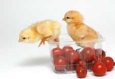 Free Chickens Royalty Free Stock Photos - 1539178