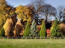 Free Autumn Leaves Stock Photo - 1539610