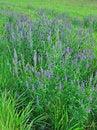 Free Beautiful Dark Blue Flowers Stock Image - 15302831