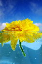 Free Yellow Flower In Glass Stock Image - 15304021