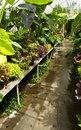 Free Greenhouse Walkway Stock Photos - 15305693