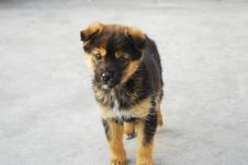Free Doggy Stock Photos - 15301053