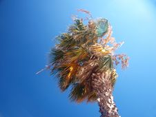 Free Exotic Palm Tree On A Windy Day Stock Photos - 15303763
