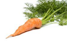 Free Carrot. Royalty Free Stock Photos - 15306118
