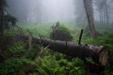 Free Felled Tree In Fog Royalty Free Stock Photo - 15307275