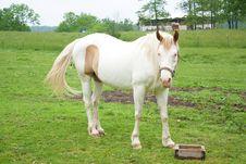 Free Paint Horse Stock Photo - 15307330