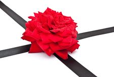 Free Red Rose With Black Ribbon Stock Photos - 15307403