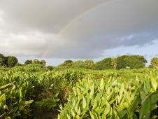 Free Rainbow Over The Everglades Royalty Free Stock Image - 15307606