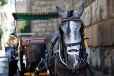 Free Horse Carriage Royalty Free Stock Photos - 15308678