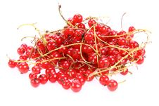 Free Red Currant Stock Photography - 15309042