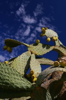 Free Cactus And Sky Stock Photo - 15309520