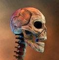 Free Human Head Royalty Free Stock Photo - 15311225