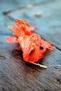 Free Fish Stock Image - 15315571