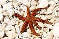 Free Sea Star Sitting On Stoned Beach Royalty Free Stock Image - 15317716