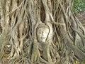 Free Ayutthaya  Head Of Buddha In Wat Mahath Royalty Free Stock Photography - 15319177