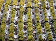 Free Old Roof Tiles Stock Photo - 15310740