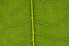 Free Leaf Texture Royalty Free Stock Images - 15311929