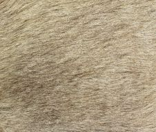 Free Closeup Of The Fur Of A Kangaroo Royalty Free Stock Images - 15312559