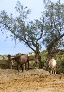 Horses Royalty Free Stock Photos
