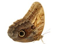 Free Boomerang Owl Butterfly Stock Photos - 15314873