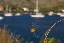 Free Spiders Web Stock Photo - 15315140