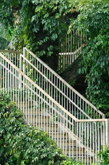 Free Stair And Access In Green Liane Surround Stock Photography - 15315422