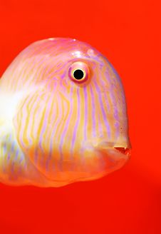 Free Fish Royalty Free Stock Images - 15315439