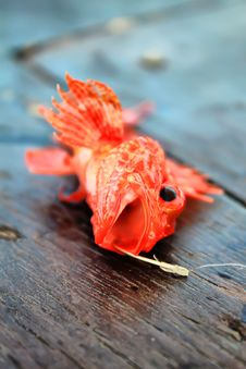 Free Fish Stock Image - 15315571