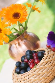 Black And Red Currant In A Basket Royalty Free Stock Image