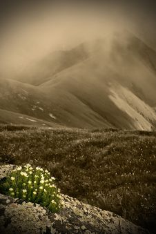 Free Mountains And Flowers Stock Photography - 15317452