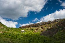 Free White Horse Stock Photo - 15318310