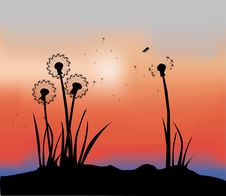 Free Vector Dandelion Stock Images - 15318714