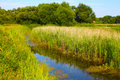 Free River And Trees Of Ukraine Stock Photography - 15320132