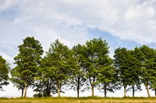 Free Trees On Horizon Royalty Free Stock Images - 15320599