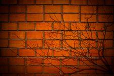Free Tree Shadow On Brick Wall Stock Photography - 15321132